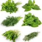 Herbs1 150x150 Herbal Vinegars and Oils