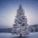Christmas Tree 2 150x150 We Wish you a Merry Christmas!