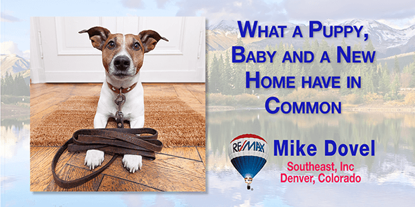 What a puppy and home have in common BLOG 600 What a puppy, baby and new home have in common