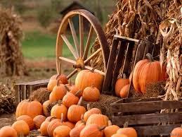 Harvest Fun   Fall Farm Activities in Colorado