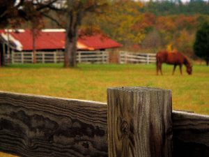 Horse bgrazing in Elizabeth, CO