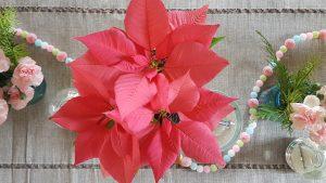 Pink Pointsettia